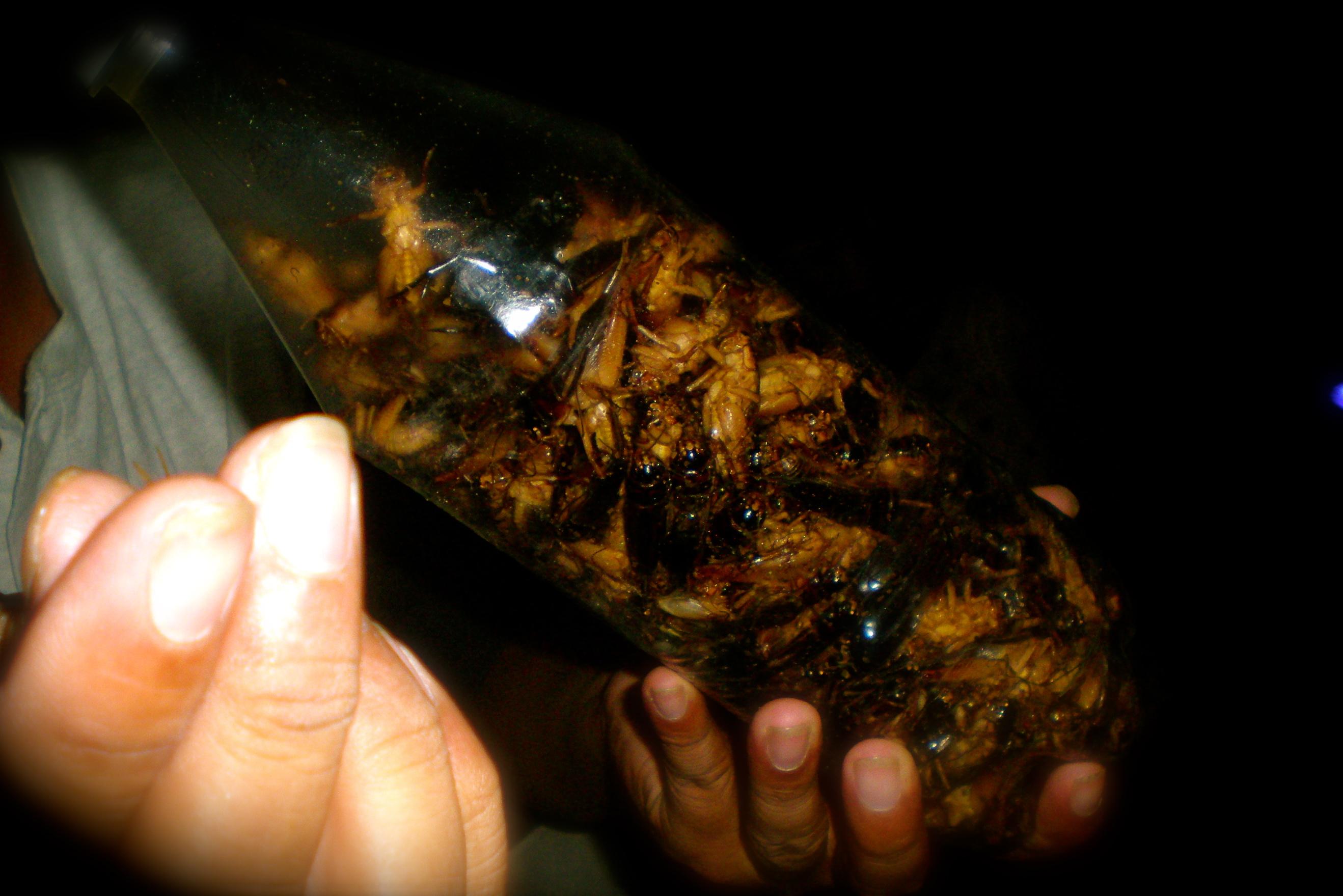 bugs Cambodia