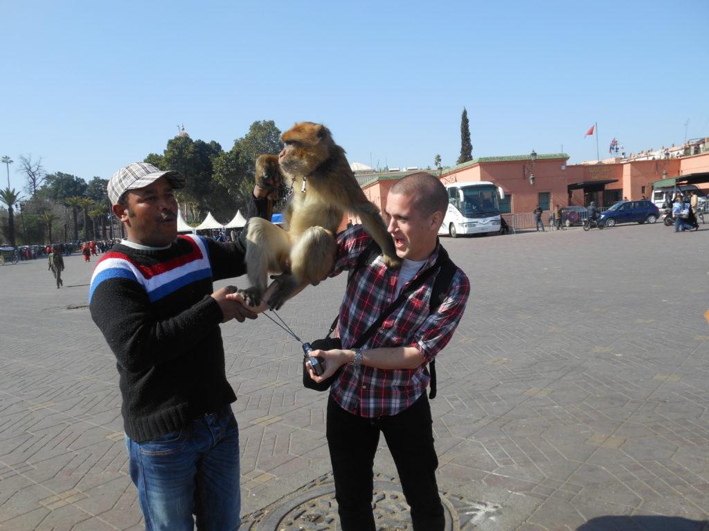 monkey marrakesh