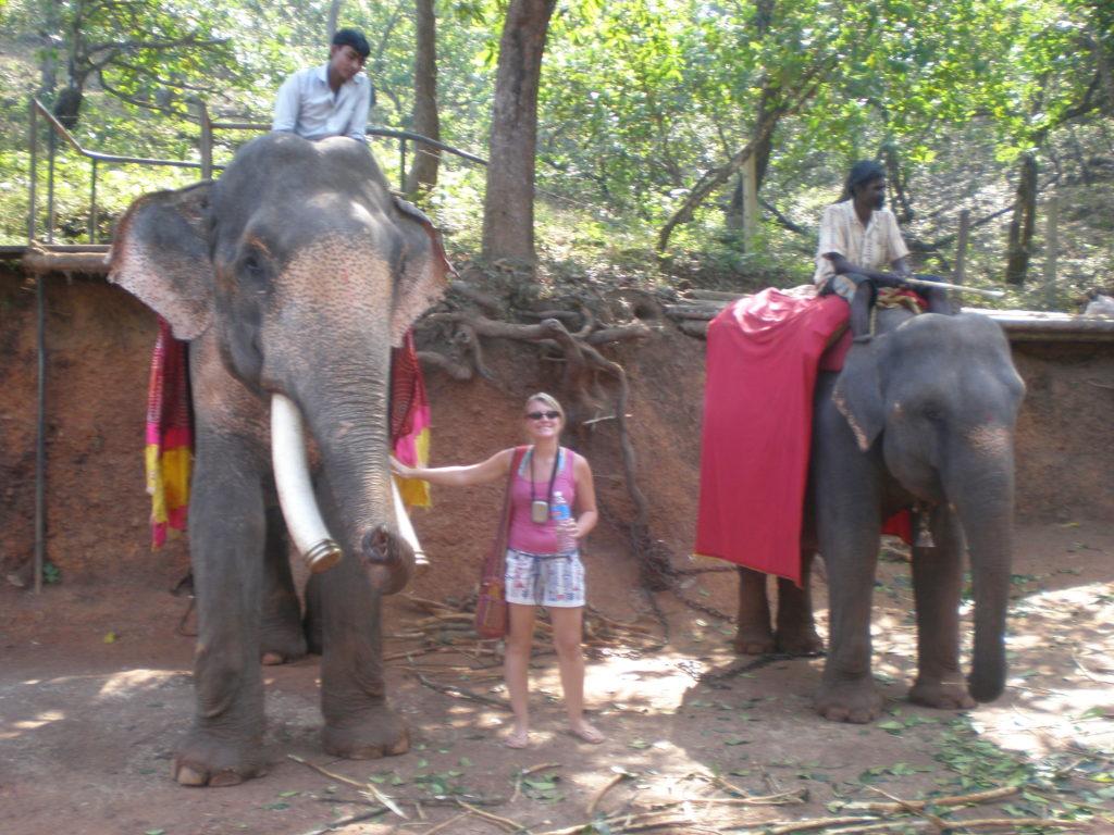 elephants Goa